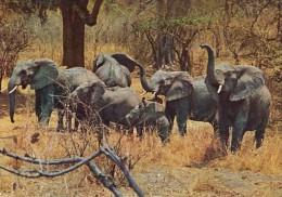 25802- HERD OF ELEPHANTS - Elephants