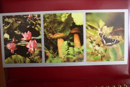 Primorie. Vladivostok Region   - USSR Postcard 1980s -  Mushroom Champignon - Champignons