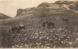 """PER�-LIMA """"CABALLOS PASTANDO"""" EDITOR DYOTT &Co LIMA E. POLACK-SCHNEIDER CIRCA 1920 NEUVE NO CIRCULADA RARE! GECKO"""