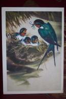 Village  Swallow  Bird - Old USSR Postcard 1980 - Oiseaux