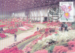 D20980 CARTE MAXIMUM CARD 2000 BELGIUM - IRISES CP ORIGINAL - Plants