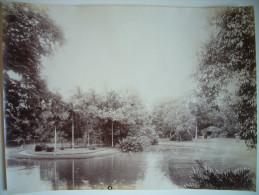 Photo Ancienne Albuminée Indochine Cochinchine Saigon - Jardin Botanique Vers 1880-1900 - 21 X 16 Cm - Photos