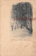 66 - PRADES  - Promenade - Route De Catllar -  Dos Vierge Précurseur -  2 Scans - Prades