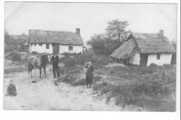 Carte-photo St-Josse (62) - Environs De Berck - Cheval. Bon état, Non Circulé. - Sonstige Gemeinden