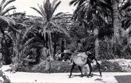TUNESIEN - GABES, Karte Gel.1959, Sondermarke - Tunesien