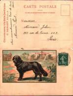 Publicité Chicorée A La Belle Jardinière, Lille - Chien Black Retriever - Advertising