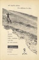 # LAVANDA COLDINAVA NIGGI IMPERIA 1950s Advert Pubblicità Publicitè Reklame Perfume Parfum Profumo Surf - Perfume & Beauty