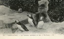 PERROS GUIREC -22- LES CALCULOTS PERROQUETS DE MER A L'ILE ROUZIE - Perros-Guirec