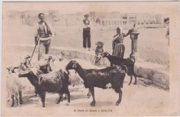 Malta- Malte :   A Herd  Of   Goats ,  Chèvre - Malte