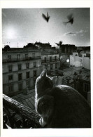Chats Chatons  Photo Marc Del MONTE - Chats