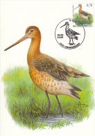 België, Maximumkaarten, Nr 3502, Grutto, Barge A Queue Noire, Buzin (6400) - Vögel