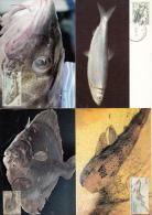 België, Maximumkaarten, Nr 3533/3537 (6404) - Fishes