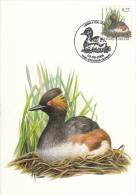 België, Maximumkaarten, Nr 3546, Geoorde Fuut, Grèbe à Cou Noir, Buzin (6410) - Oiseaux