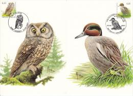 België, Maximumkaarten, Nr 3623/3624, Anas Crecca, Aegolius Funereus, Buzin (6425) - Uilen