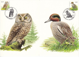 België, Maximumkaarten, Nr 3623/3624, Anas Crecca, Aegolius Funereus, Buzin (6425) - Eulenvögel