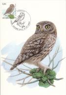 België, Maximumkaarten, Nr 3672, Athena Noctua, Buzin (6435) - Hiboux & Chouettes