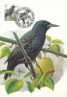 België, Maximumkaarten, Nr 2638, Sturnus Vulgaris, Spreeuw, Buzin (6647) - Oiseaux