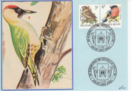 België, De Groene Specht, 1/10/1988, Sint-Eloois-Winkel (6897) - Oiseaux