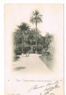 CPA - ALGER-  Jardin D´Essai- Allée Des Palmiers  -    (056) - Alger