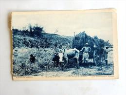 Carte Postale Ancienne : GRANDE COMORE : Charrette Chargée De Citronelle - Comores