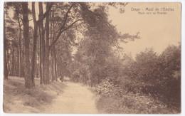 Orroir  Mont De L'Enclus  Route Vers Les Acacias - Mont-de-l'Enclus