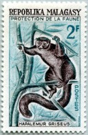 N° Yvert 357 - Timbre De Madagascar (1961) - MNH - Hapalemur Griseus (2) (JS) - Madagaskar (1960-...)