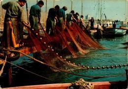 SCENES DE PECHE EN MEDITERRANNEE.....CPM ANIMEE - Pêche