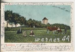 Landskron V.1902 Schlossberg Mit Kühe An Der Leine Und Personen Liegen Im Gras Auf Der Wiese  (6374) - Schlesien