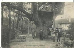 Robinson - Le Gros Châtaignier - France