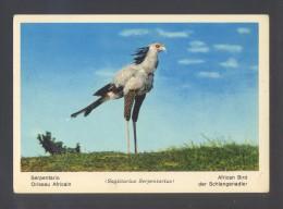 Fauna Africana *Serpentario...* Ed. Rotalcolor Nº 10. Nueva. - Pájaros