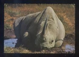Rhinoceros *Resting In Water Pool* Ed. East Africa Nº 1409. Nueva. - Rinoceronte
