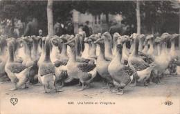 ¤¤  -   4648   -   Oies , Jars   -  Une Famille En Villégiature  -  ¤¤ - Birds