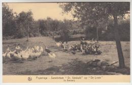 Poperinge, Poperinghe, Sanatorium St Idesbals op de Lovie, de boerderij (pk22482)