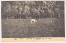 Poperinge, Poperinghe, Sanatorium St Idesbald Op De Lovie, De Herten In Het Park (pk22490) - Poperinge