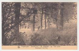 Poperinge, Poperinghe, Sanatorium St Idesbald op de Lovie, wandellaan in het park (pk22494)