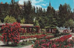España--Madrid--1964--Rosaleda Del Parque Del Oeste--Fechador --Madrid- A, Sotteville Les Rouen, Francia - Flores