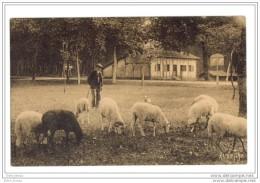 Scene Type Berger Landais 40 Landes - Farmers