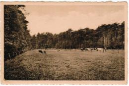 Zoersel, Zoo Omschiep De Taaie Arbeid Der Kempische Boeren De Dorre Heide Tot Weelderige Bossen En Malse Weiden Pk21307) - Zoersel