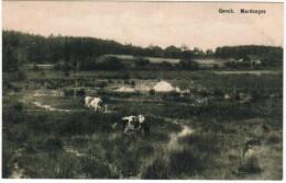 Genk, Genck, Marécages (pk21333) - Genk