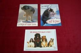 LOT DE 3 CARTES DE  POSTALE SUR  LE THEME DES ANIMAUX  °°  Les Chiens - Dogs