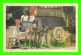 ATTELAGES DE CHIENS - A DOG CART IN RURAL QUEBEC - R. Q. - CIRCULÉE EN 1947 - PECO - - Attelages