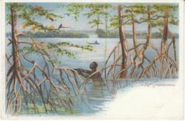 Kamerun Cameroon German Colony Era, Sanagafluss River Swamp Scene, Mangrowewalk, C1890s/1900s Vintage Postcard - Cameroon