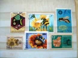 Bees Honeybees Abeilles Abejas - Honeybees