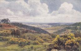 GILLS LAP, ASHDOWN FOREST. A.R. QUINTON - Quinton, AR