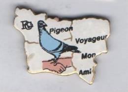 Pigeon Voyageur Mon Ami , Normandie , Colombophilie - Tiere