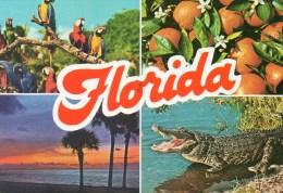 - FLORIDA.  - Scan Verso - - Orlando