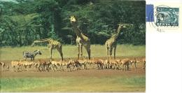 KENYA  KENIA  African Wild  Life  Nice Stamp - Kenia