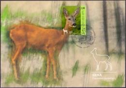 Croatia - Roe Deer, Maximum Card, 2015 - Animalez De Caza