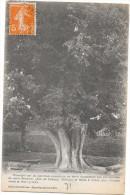CLUNY - 71 - Le Tilleul D'Abeilard - VAN - - Cluny