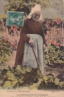 LA NORMANDIE PITTORESQUE LES CHOUX SONT BIAUX - Fleurs, Plantes & Arbres